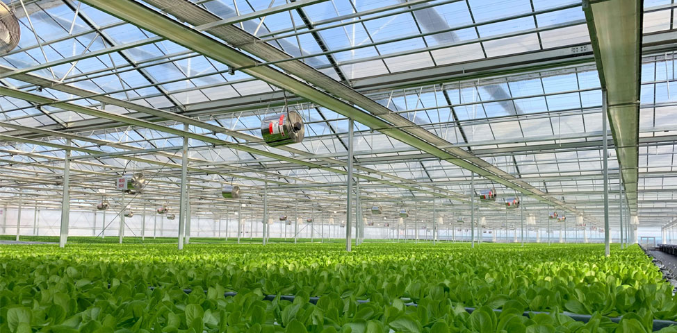 Japan's Giant Technology Offers Cutting-edge Agricultural